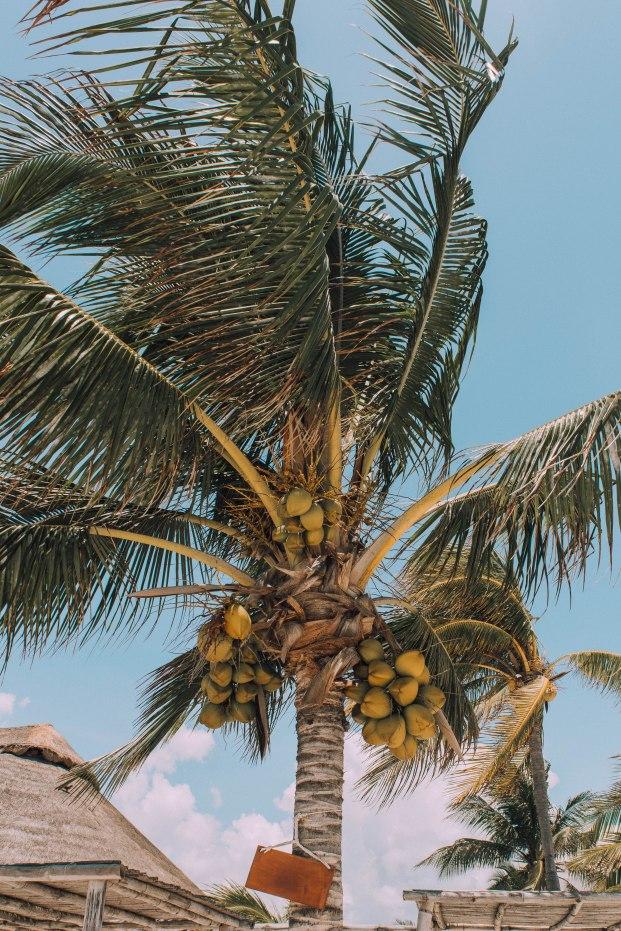 Cocos San Crisanto